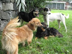Amazing rescue of dogs from cave in Ethiopia